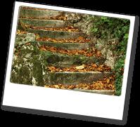 Jenners aus Rostock ist stark im Gartenlandschaftsbau, Gebäudereinigung, Hausmeisterdienst, sowie Reparaturservice.