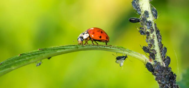 Jenners Dienstleistungen umfasst Gartenlandschaftsbau, Geb‰udereinigung, Hausmeister- und Reparaturservice.